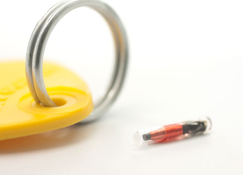 micro chip identification